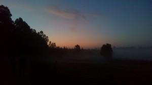 Partenza tra buio, nebbia, freddo ed eucalipti